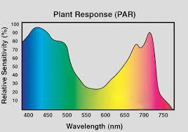 best light for plants lighting fundamentals