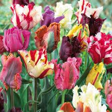 83 best bulb flowers images on bulb flowers bulbs and