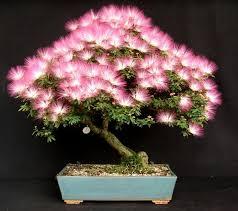 1221 best bonsai 1 images on bonsai trees plants