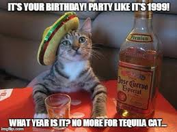 tequila cat on birthdays imgflip
