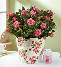 flowers and gifts just because sending flowers and gifts 1 800 flowers