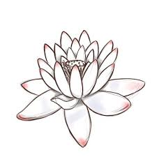 Simple Lotus Flower Drawing - 326 best floral art images on pinterest drawings lotus flowers