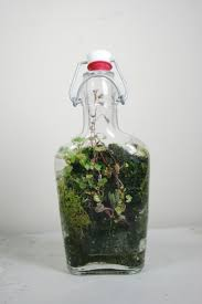 144 best garden terrariums u0026 cloches images on pinterest