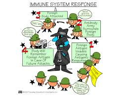 immune system response the immune system protects the body from
