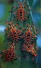 Small Red Bugs On Patio by 135 Best Kevers Images On Pinterest Beetles Nature And Animal