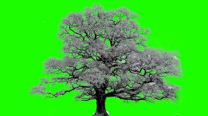 winter tree in green screen free stock footage youtube