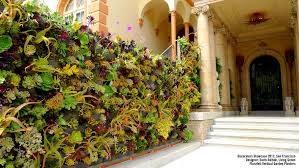 plants on walls vertical garden u0026 living wall gallery