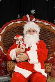 pet photos with santa palm beach dog photographer west palm