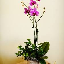 orchid arrangements san jose florist flower delivery by flowers by