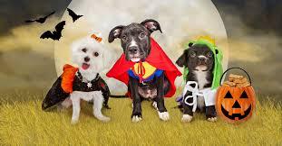 Halloween Costumes Cats List 14 Funny Pet Costumes 2017 Halloween