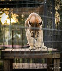 the catty shack ranch 172 photos u0026 63 reviews zoos 1860