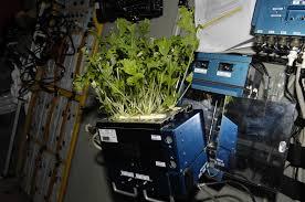 Types Of Vegetables To Grow In A Garden - nasa growing plants and vegetables in a space garden