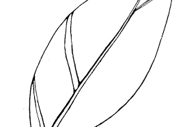 feather free coloring pages on art coloring pages