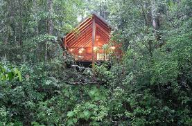 famous tree houses get ready for a dazzling darwin tour