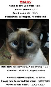 Missing Cat Meme - have you seen guai guai a missing cat lost at lengkok bahru www
