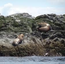 California wildlife tours images San juan island whale wildlife tours friday harbor wa top jpg