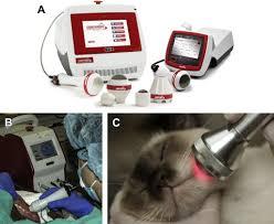 laser and radiosurgery in veterinary dentistry veterinary