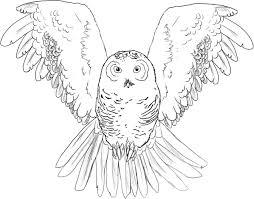 owl cutouts coloring