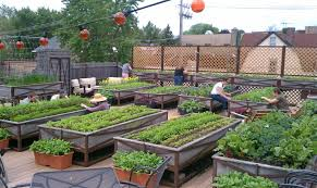 rooftop garden design the nation u0027s first certified organic rooftop farm atop the