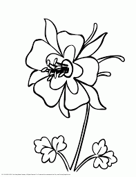 colorado columbine flower coloring page coloring page for kids