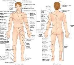 Human Anatomy And Physiology Videos Structure Of Internal And External Body Part Of Human Learn
