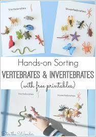 free printable worksheets vertebrates invertebrates hands on sorting vertebrates and invertebrates free printable