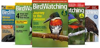 Your Big Backyard Magazine by Subscriptions And Digital Editions Birdwatching