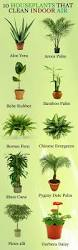 best 25 indoor floor plants ideas on pinterest living room
