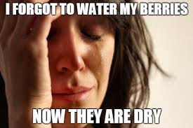 Mouth Watering Meme - pfq meme compilation forums pokéfarm q