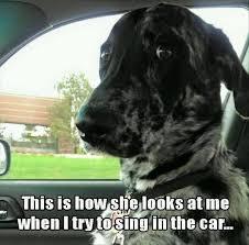Dog In Car Meme - dog in the car meme
