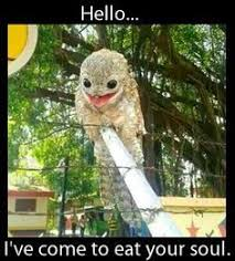 Crazy Bird Meme - the potoo nature s most surprised looking bird lazer horse