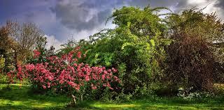 albero giardino per scegliere l albero giusto per il vostro giardino