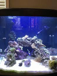 stunner led aquarium light strips grandmaester u0027s 32g led biocube reef central online community