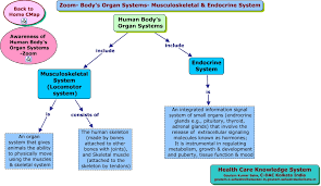 endocrine system concept map zoom s organ systems musculoskeletal endocrine system html