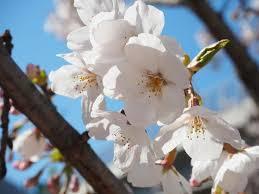 184 best shop trees images on flowering trees fruit