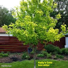 great trees to consider planting in your yard this spring family