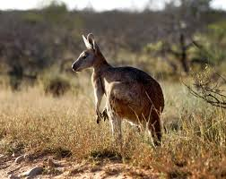 native plants of western australia outback animals tourism western australia