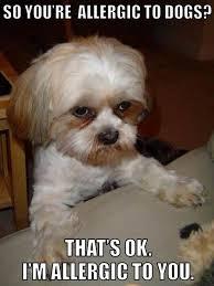 Grumpy Dog Meme - lmao perfect for a certain ex friend of mine i m