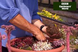 video guide rock garden in a trough gardenersworld com