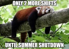 Panda Meme - lazy red panda meme generator imgflip
