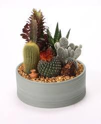 mini cactus garden u2026 pinteres u2026