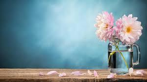 dalia in vaso dalia in vaso fotografia stock immagine di mazzo colorful 66633918