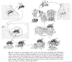 about bees habitat and coevolution resonating bodies