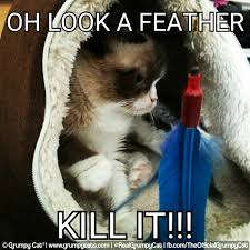 Grumpy Cat Meme - random grumpy cat meme by willowblaze23 on deviantart