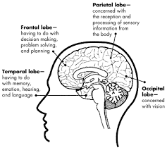 What Portion Of The Brain Controls Respiration The Brain U2014lesson 1 U2014the Brain What U0027s Going On In There Page 1 Of 2