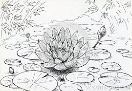 lilly pad clip art clip art library
