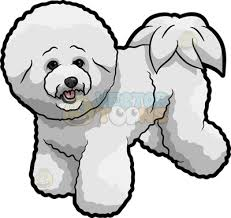 bichon frise cartoon groomed clipart cartoon images