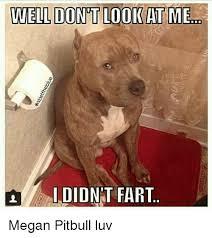 Pitbull Meme - didn t fart megan pitbull luv megan meme on esmemes com