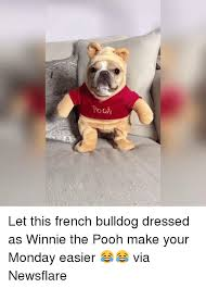 French Bulldog Meme - 25 best memes about french bulldog french bulldog memes