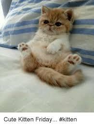 Cute Kitten Memes - cute kitten friday kitten meme on me me